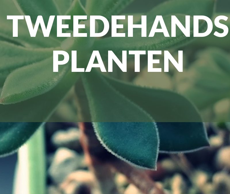 Bekende planten in de Nederlandse tuinen