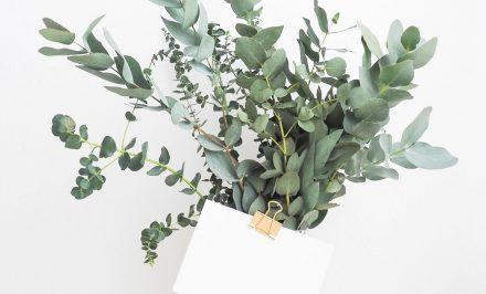 De voordelen van tweedehandse tweedehands planten