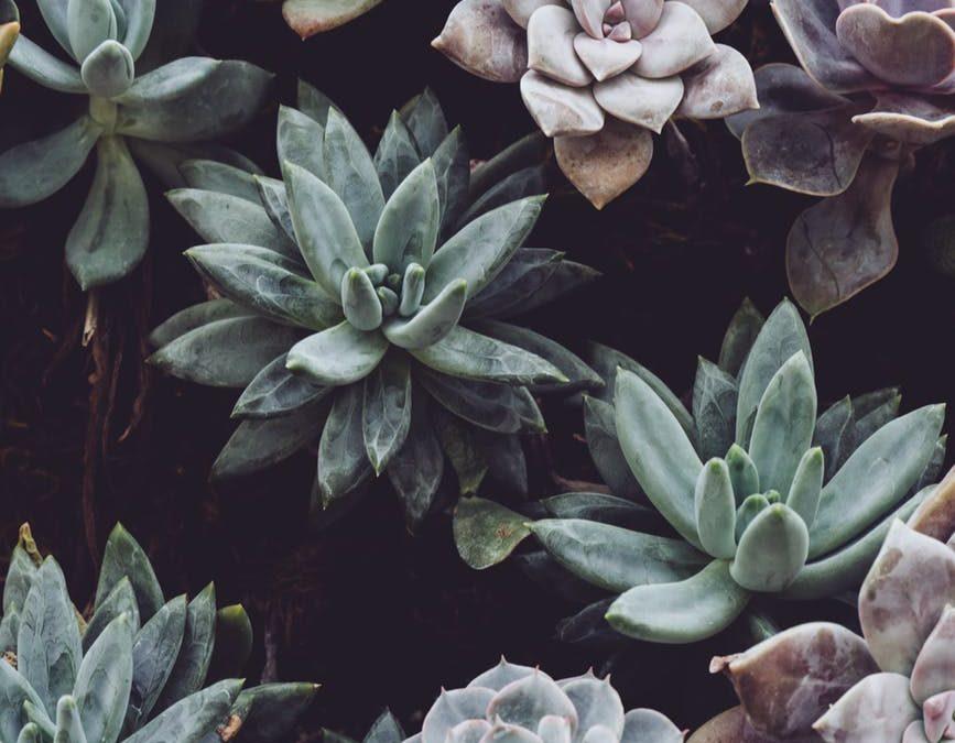 Ruil je planten