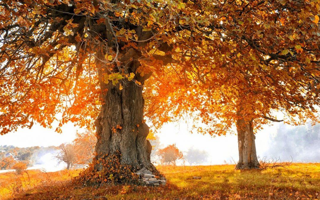 Bomen snoeien