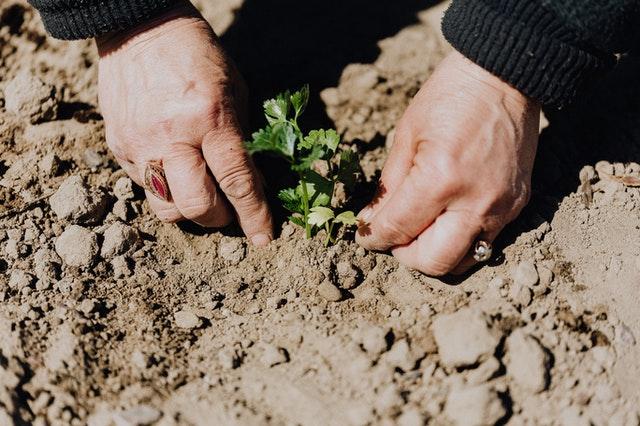 Geen zin om zelf je tuin te verbouwen? Schakel een hovenier in.